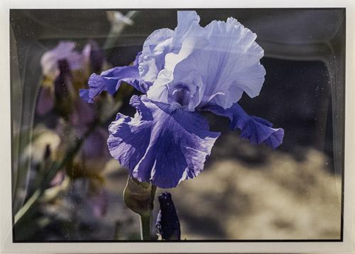 5 x 7 Iris Notecards and Envelopes Set