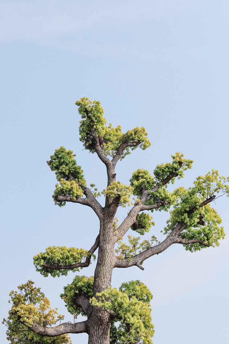 Photo of a tree top