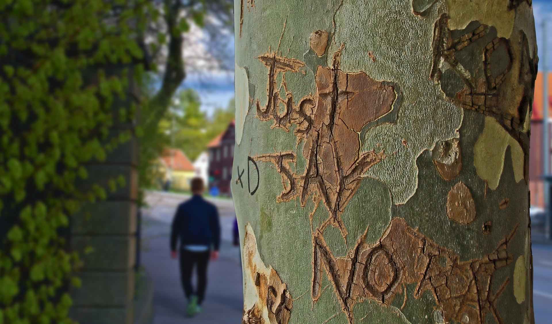 """Ein Baumstamm, auf den die Worte """"Just Say No"""" eingeritzt sind."""