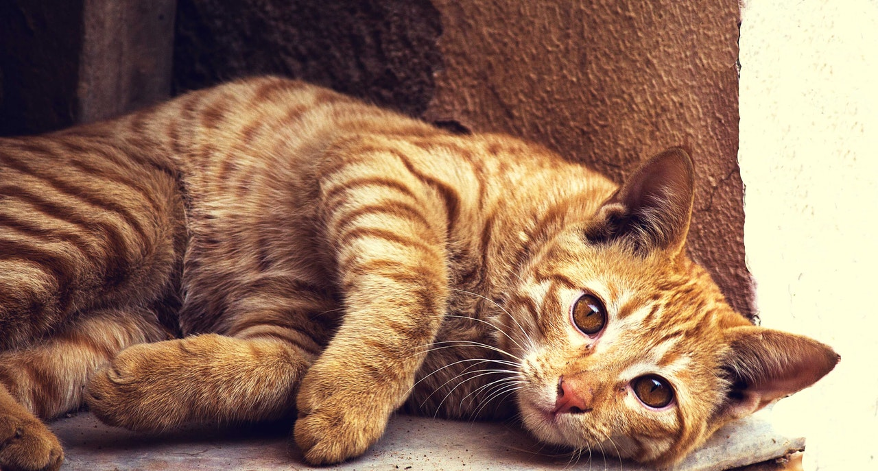 Cat Lying in a Cat Bed