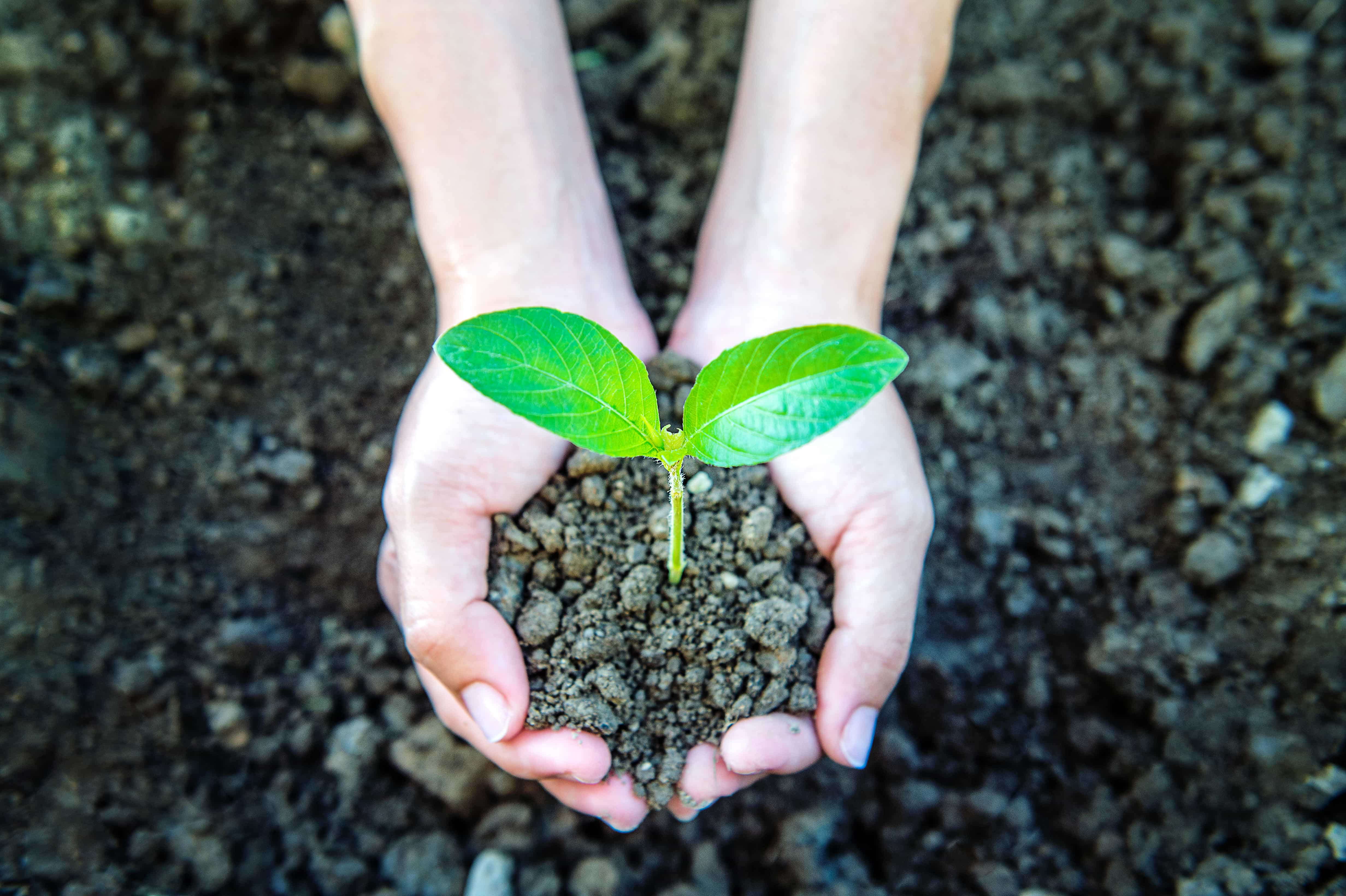 Why Sustainable Development