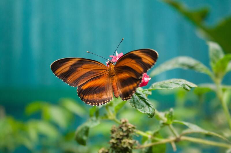 Papillon du Butterfly Garden à Monteverde Costa Rica que faire