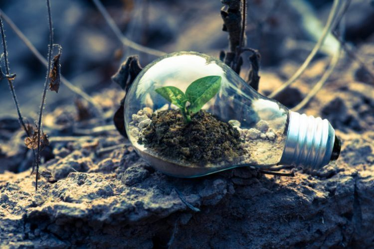 Image of a lightbulb with a plant growing in it | Sustainable office article