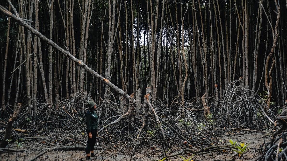 Broken Mangrove – Dhany Darmansyah Saragih, Indonesia