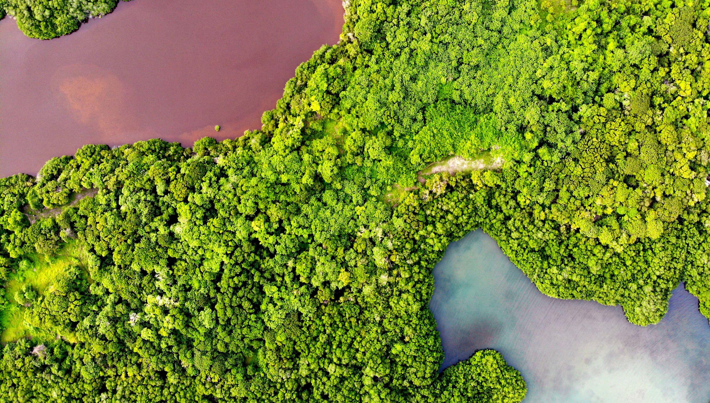 Mangroves from Above - Mariana Rivera, Colombia