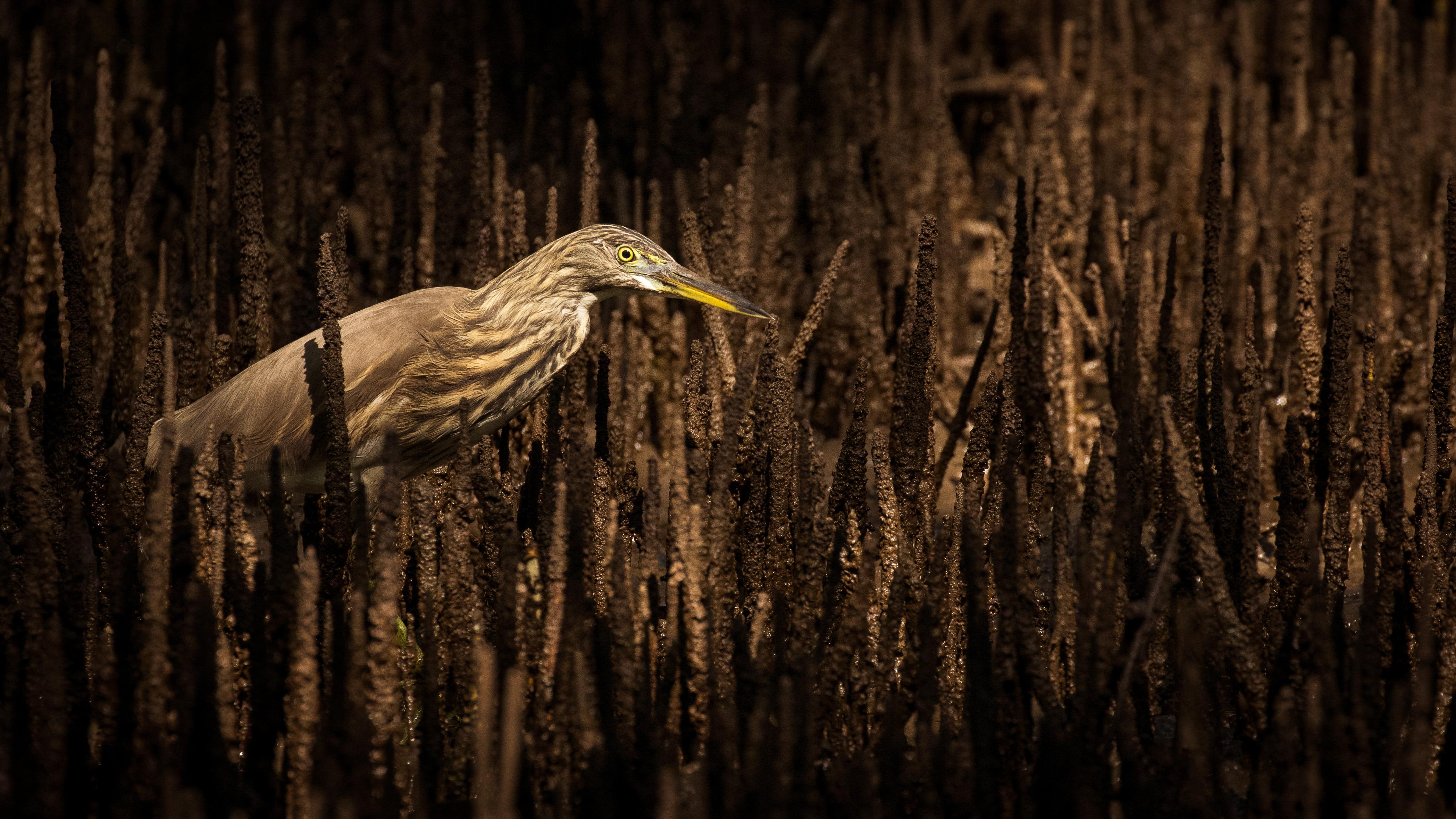 Mangrove Hunter - Samuel Bloch, India