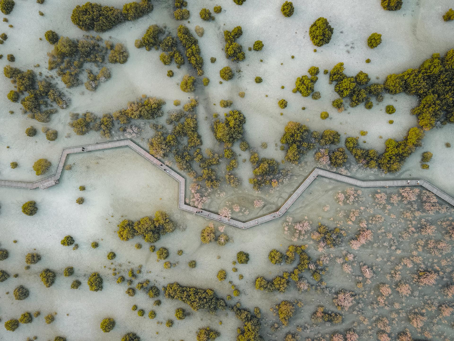 A Walk through the Mangroves - Akbar, UAE