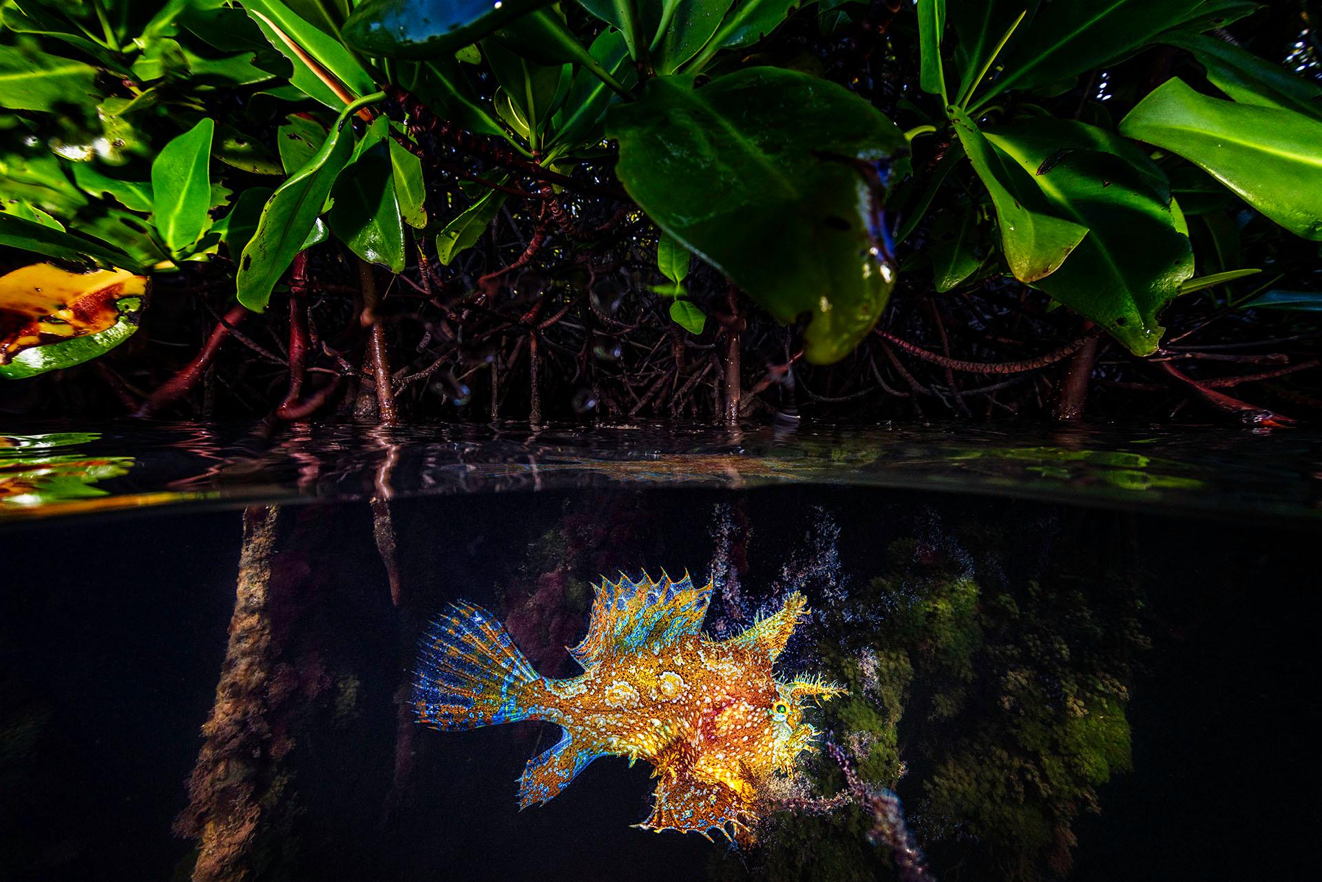 A Rare and Occasional Encounter – Lorenzo Mittiga, Netherlands Antilles