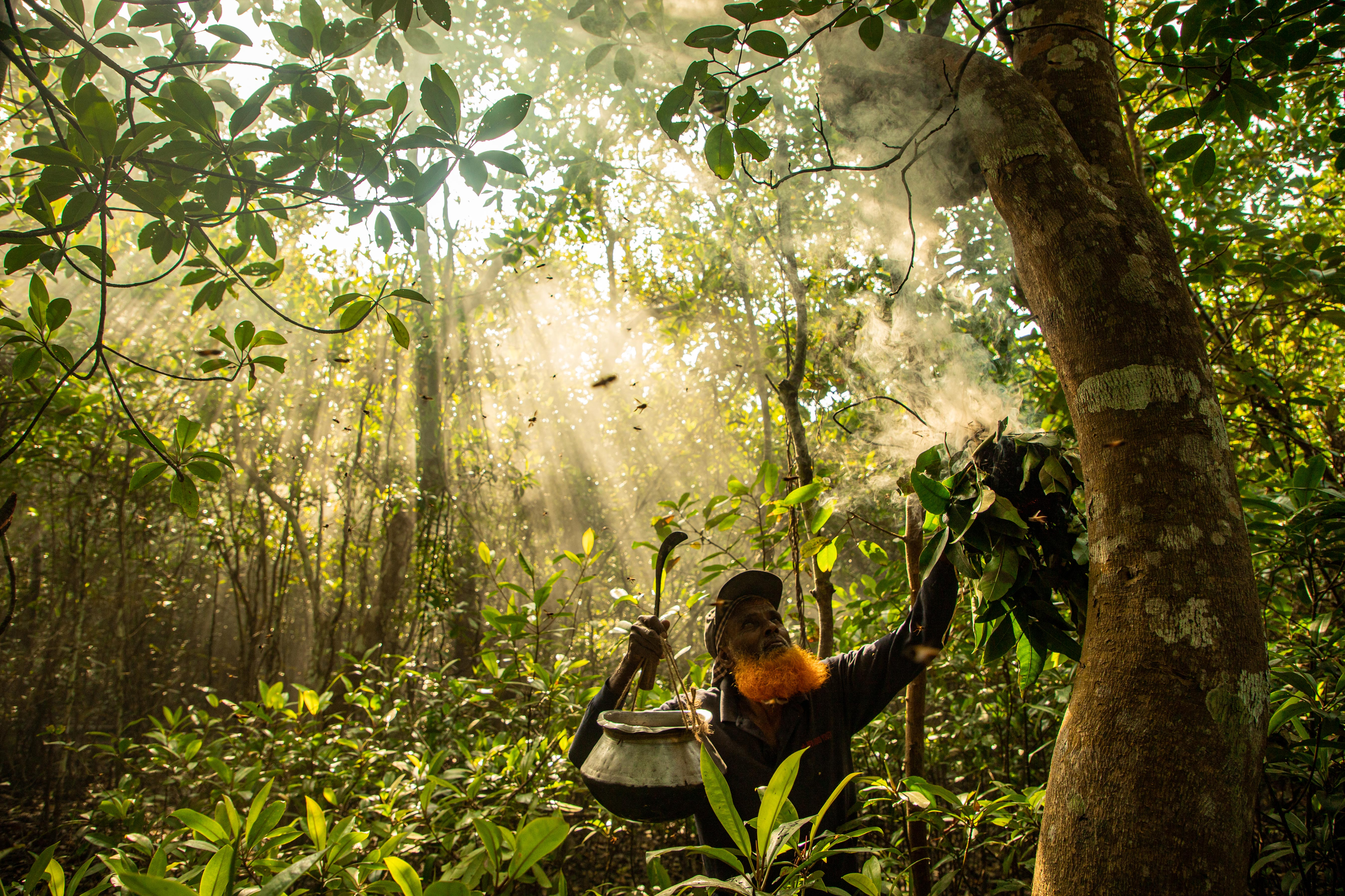 'A Brave Livelihood' shows a precious moment a wild honey gatherer subdues giant honeybees by smoke, deep in the mangrove forest.