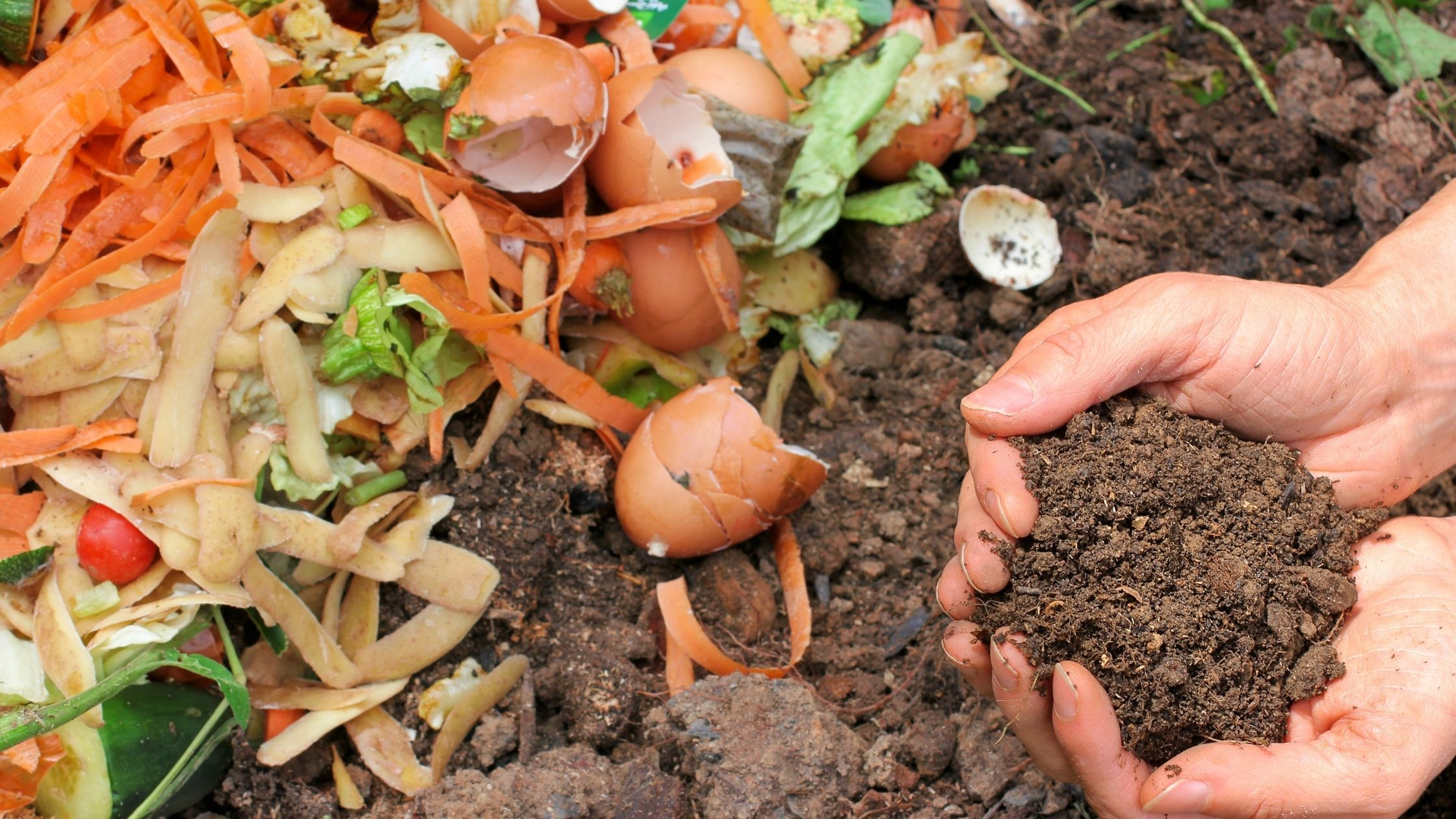 What you need to know about food waste, composting, and the environment