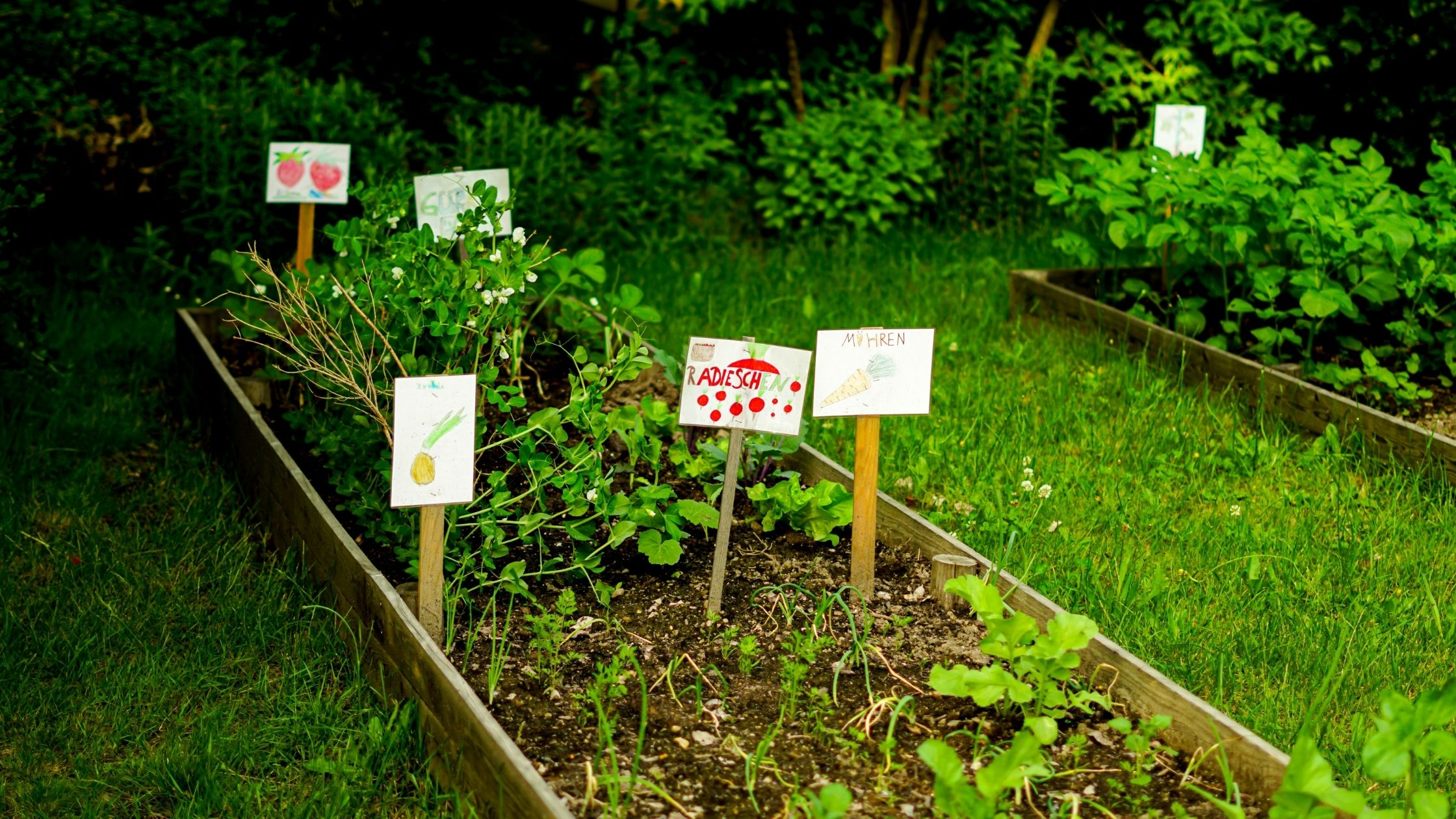 School gardens are an excellent tool, not only for educational enhancement, but also inspiring future generations to become food and environmental justice activists!