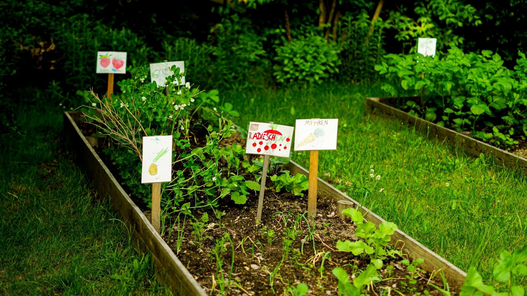 School Gardens Inspire Food Justice and Environmental Activism