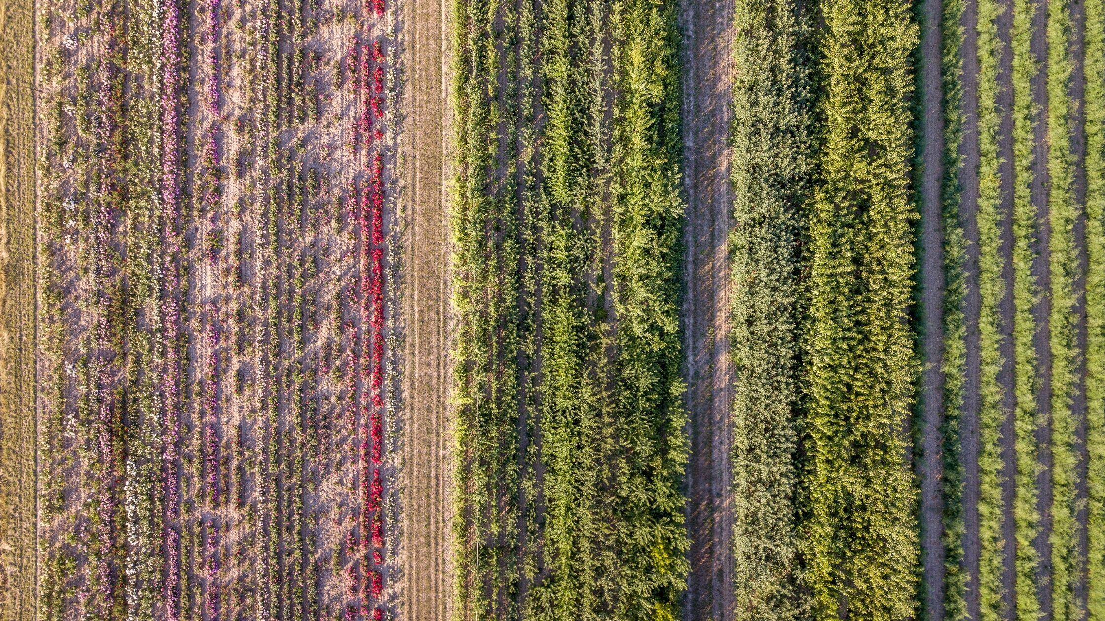 Biodiversity, Planetary Health, and Food