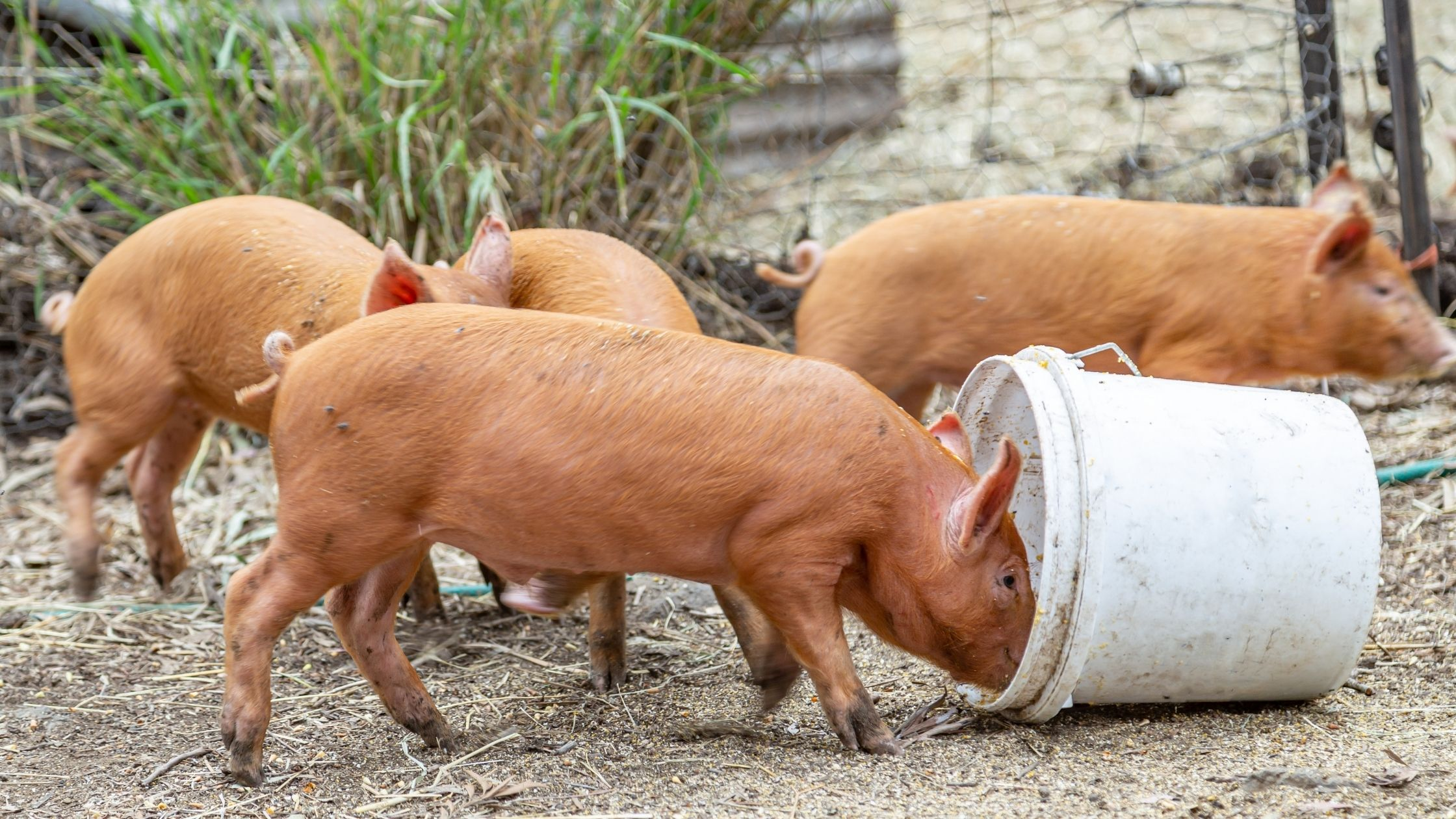 Impact of Animal Feed Production on the Environment