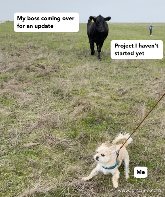 A cow upset that a dog hasn't started his work yet.