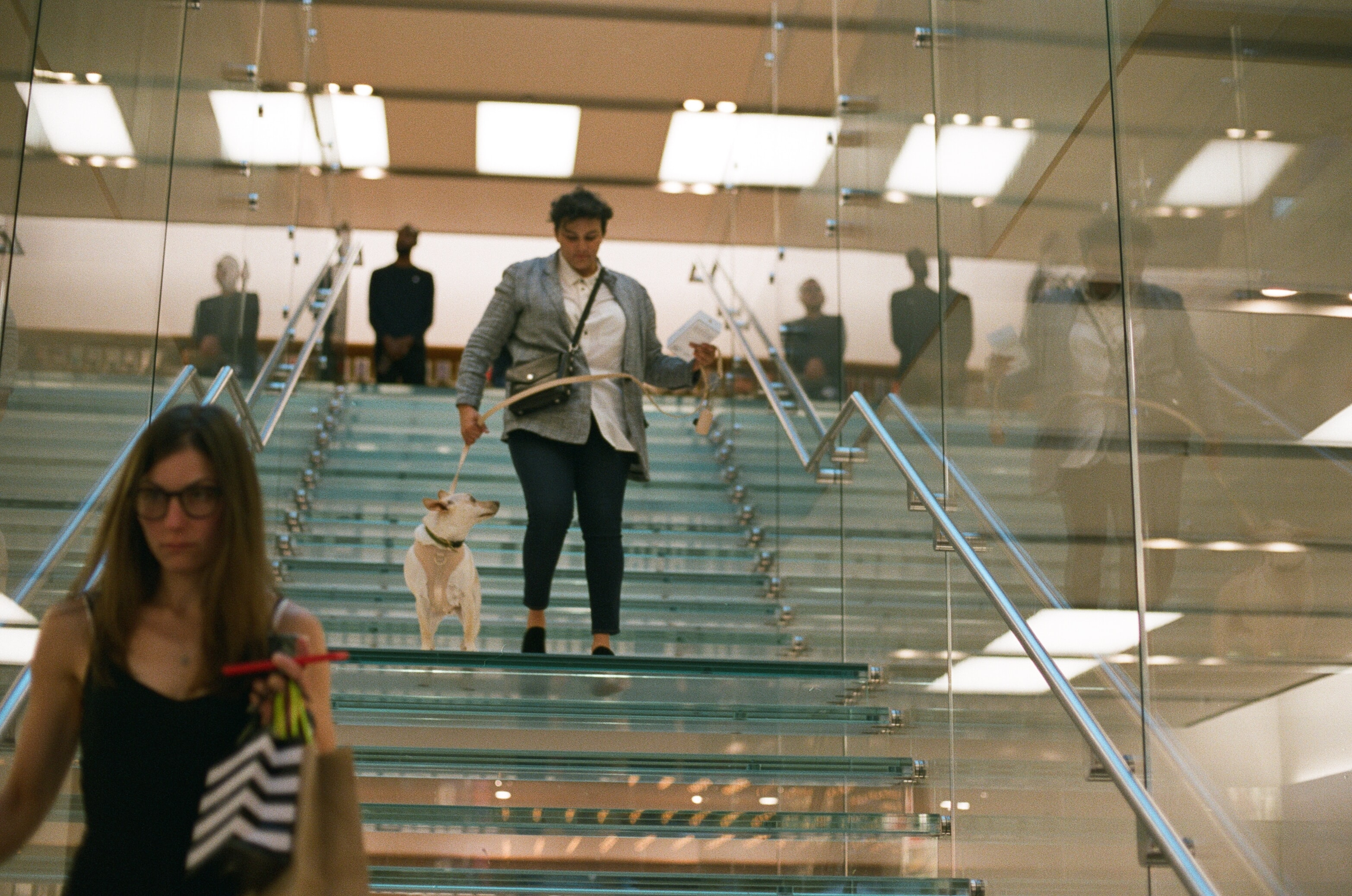 A woman in a blue jacket and jeans walking a small white dog down a glass staircase.