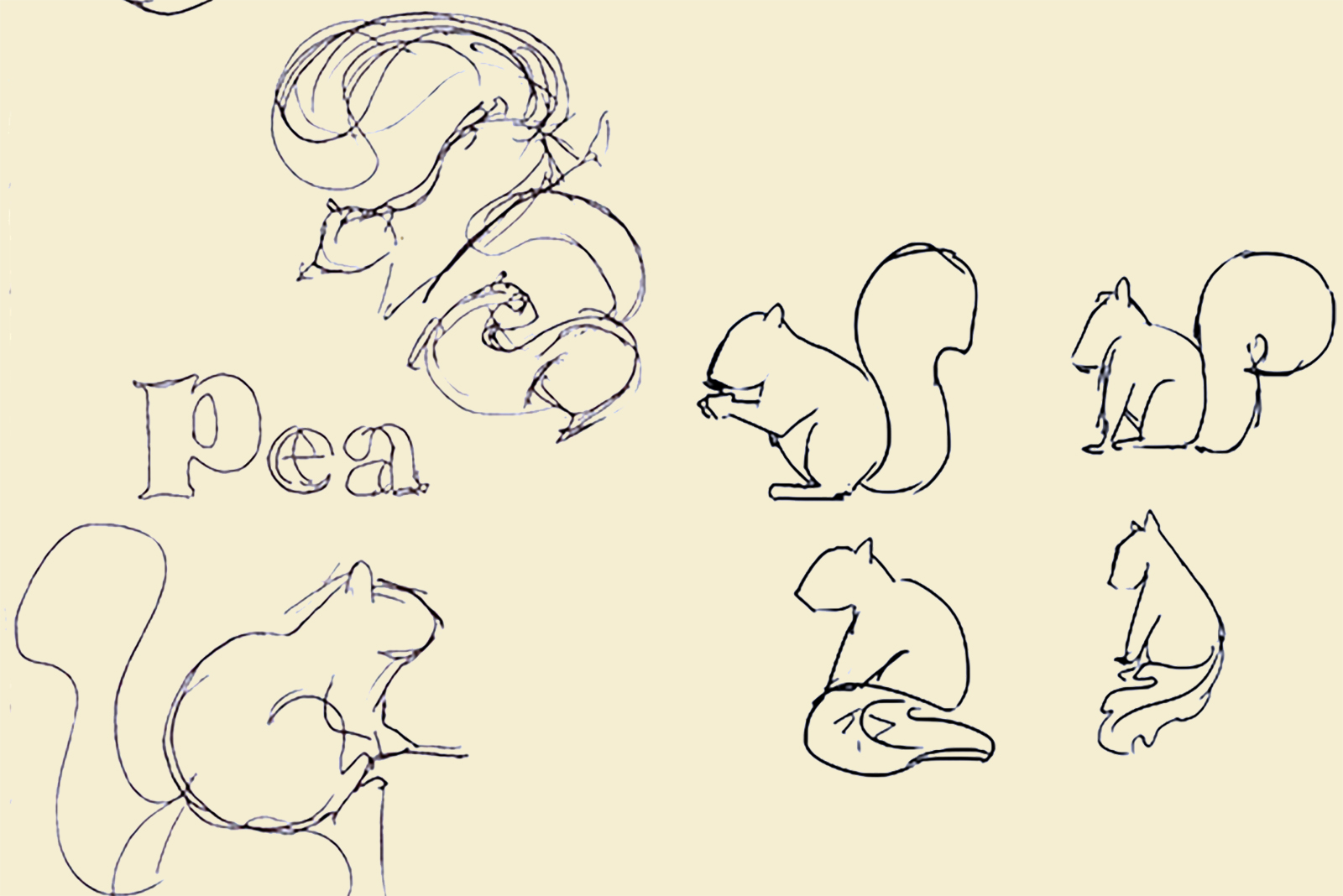 Sketches created during the branding of Pease Park Conservancy.