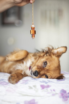What to Expect From a Pet Psychic