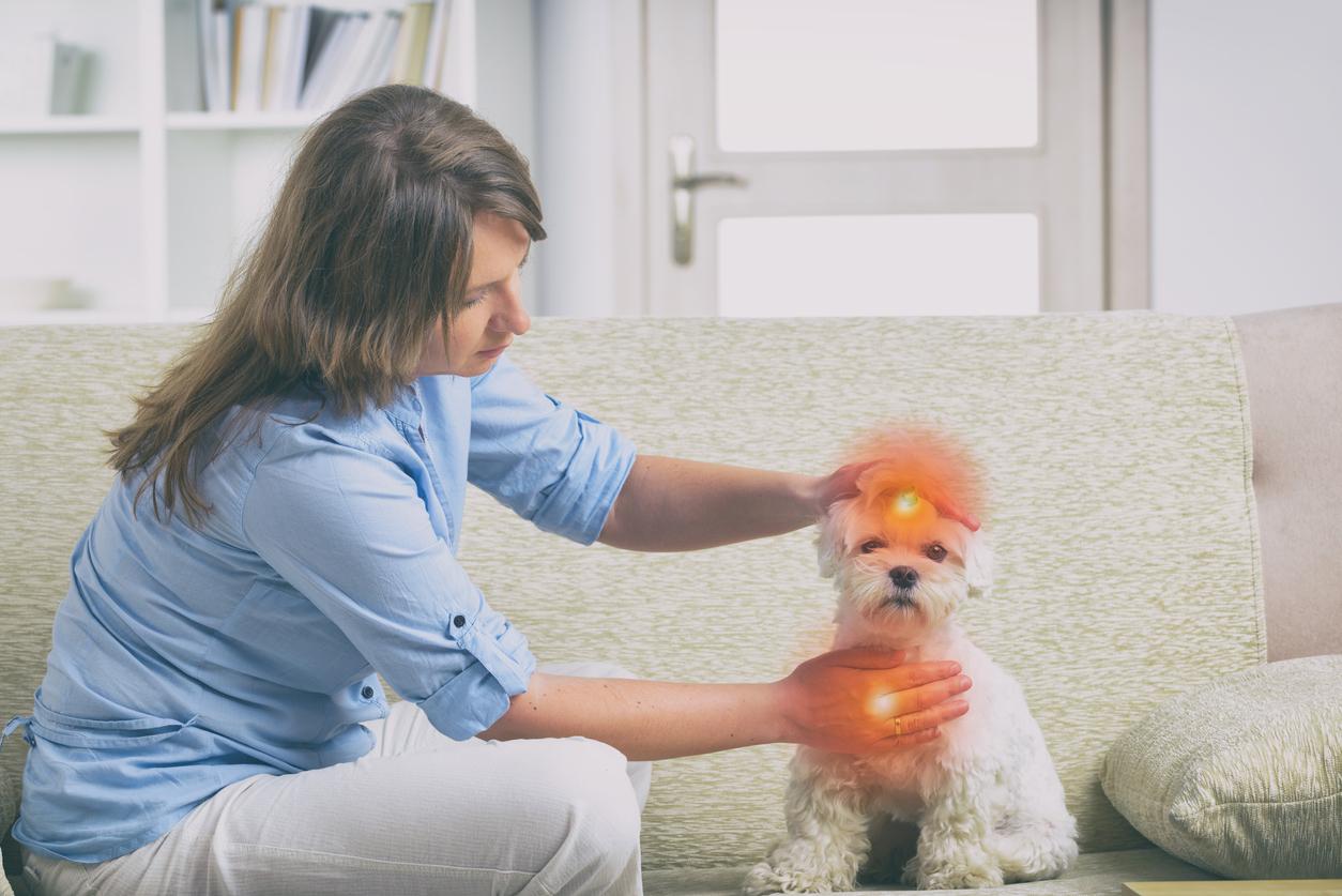 animal communicator-works-on-a-dog's-chakras