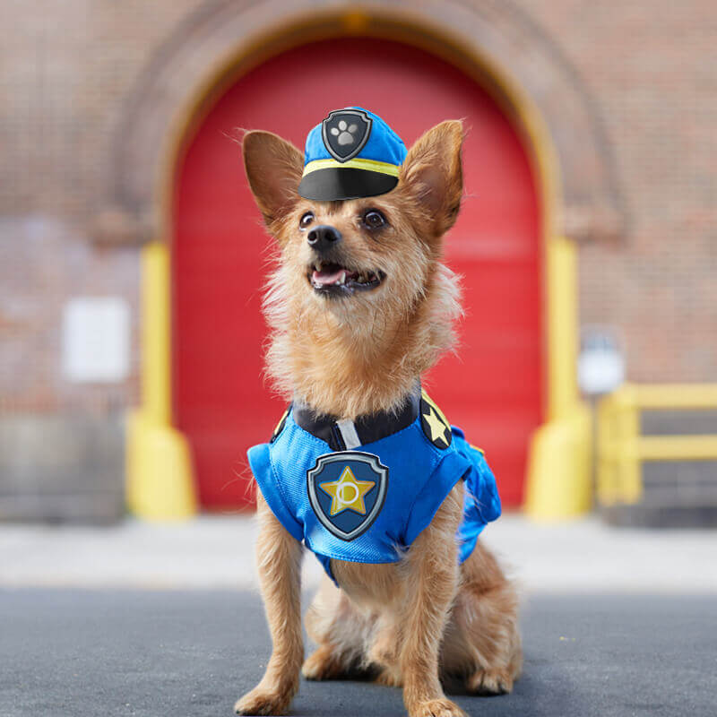 This cute little dog is dressed as Chase from Paw Patrol for Halloween.