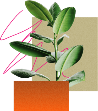 green leafy plant growing amongst a collage of abstract shapes