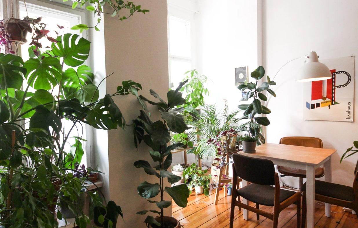 Cellar Door Plants
