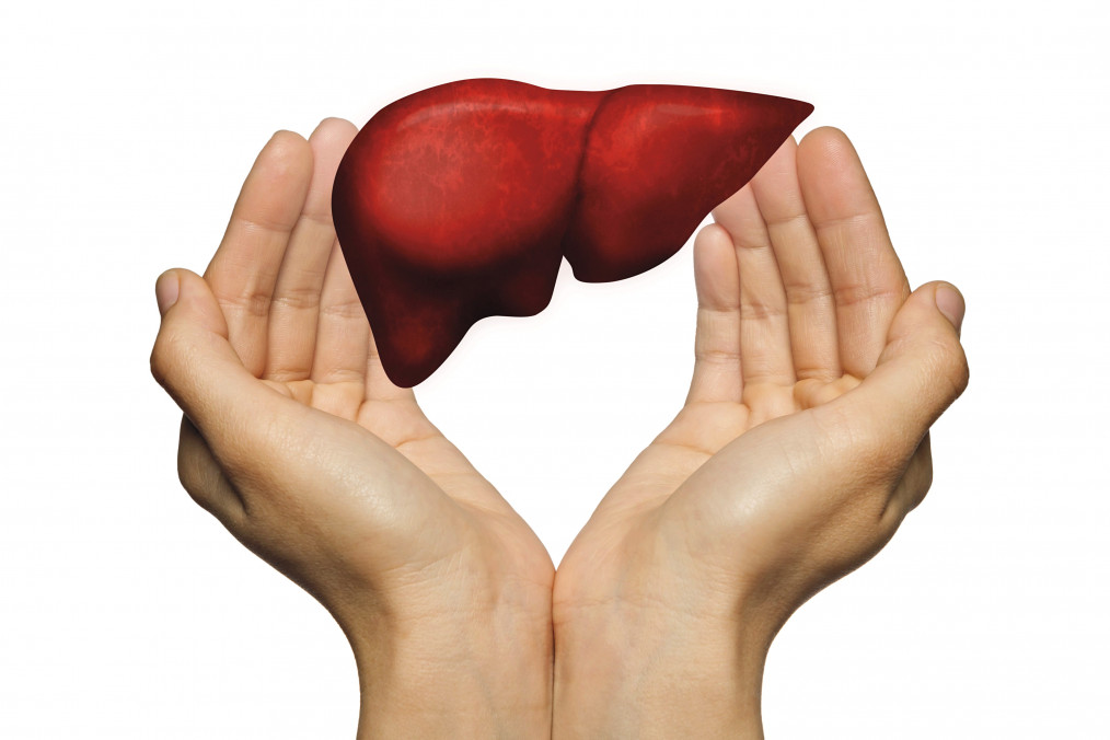 Importance of Liver Health