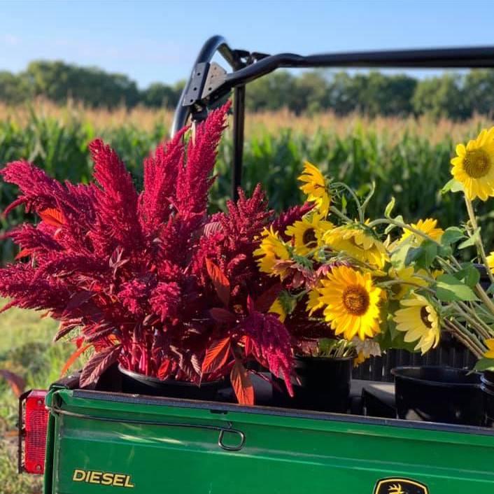 Flower truck on the farm