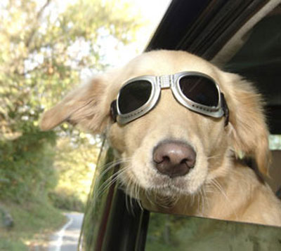 Travel with your dog | Perropet, pet magazine