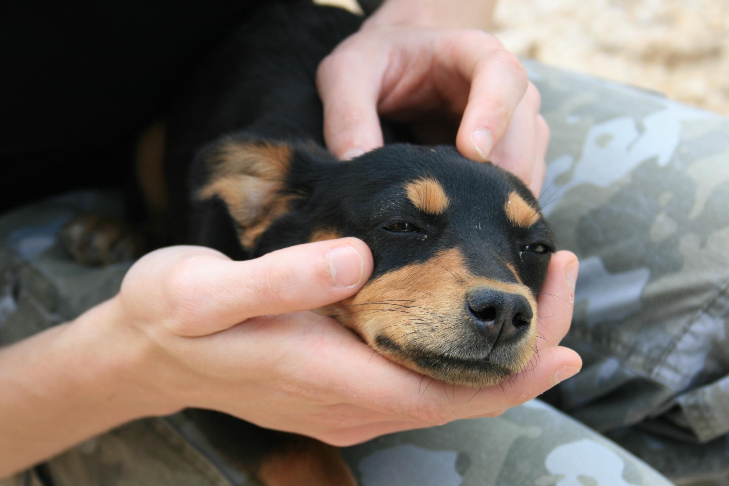 Puppy_near_Coltani_-_17_apr_2010