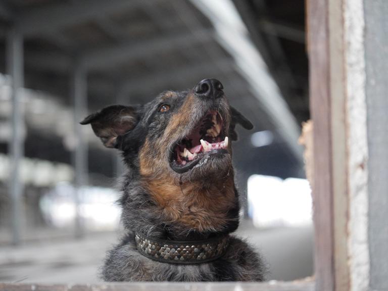 dog-dental-health-important-2