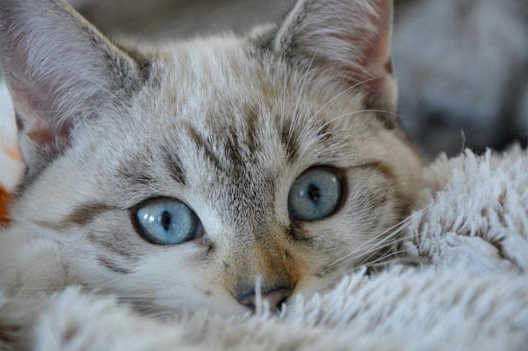 cat-vomiting-problem