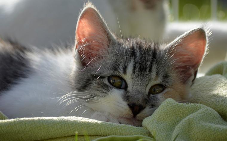 cat-vomiting-causes