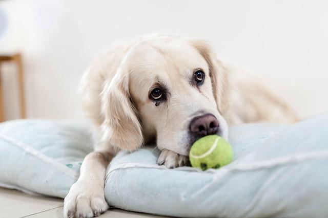 dog-upset-tummy