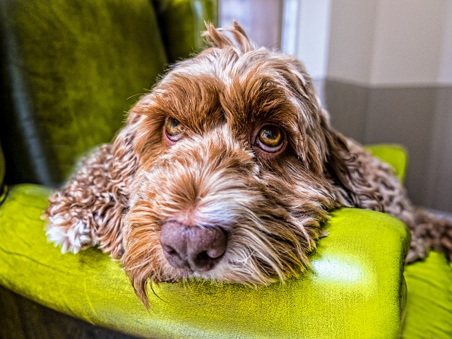 dog-boredom-reasons