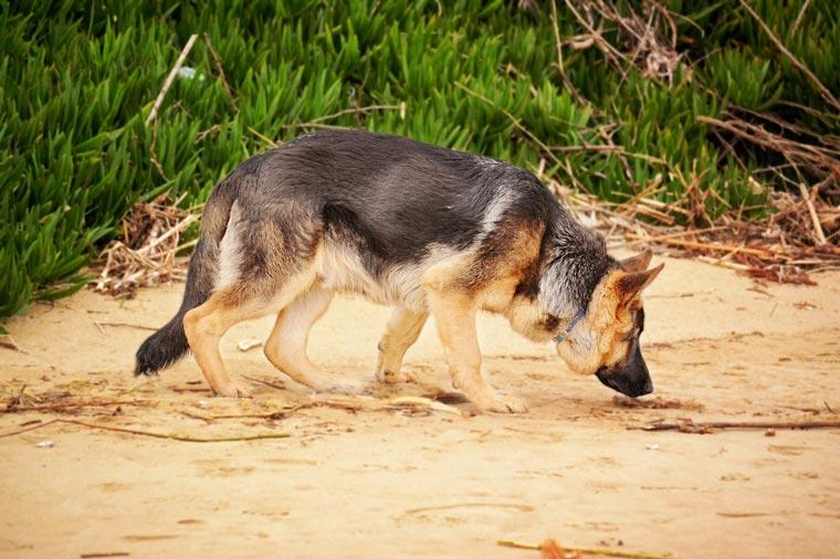 why-do-dogs-eat-dirt|reasons-your-dog-eats-dirt|dog-boredom-reasons|||dog-health-issues