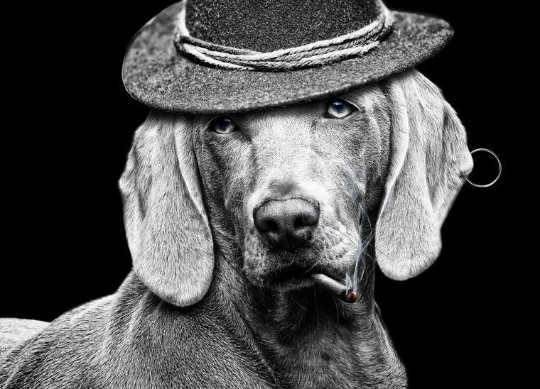 does-cigarette-smoke-harm-pet-health|smoking-cigarette-harmful-pet-dog-cat|