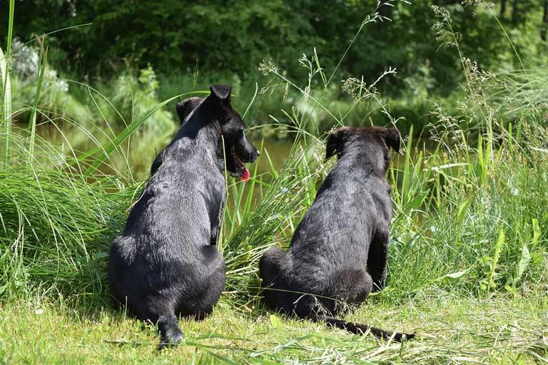 why-dog-always-eating-grass-1|dog-always-eating-grass-3|why-dog-always-eating-grass-2