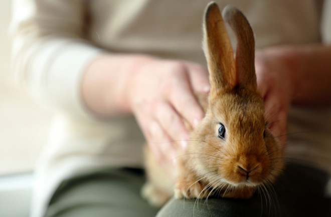 How Rabbits Became Our Pets | Discover Magazine