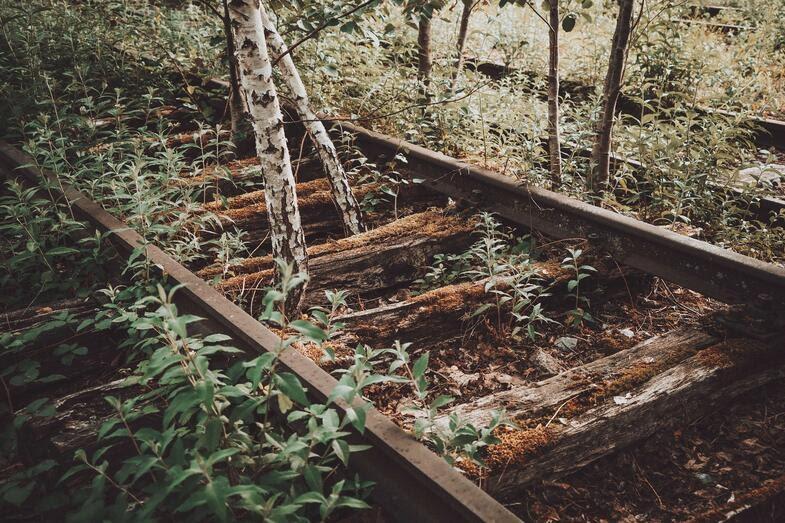 abandoned mine railway tracks overgrown with trees