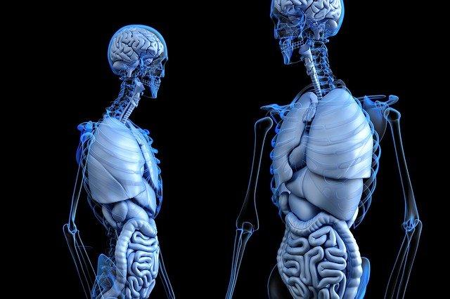 3d model ljudskog tijela portal zdravlje