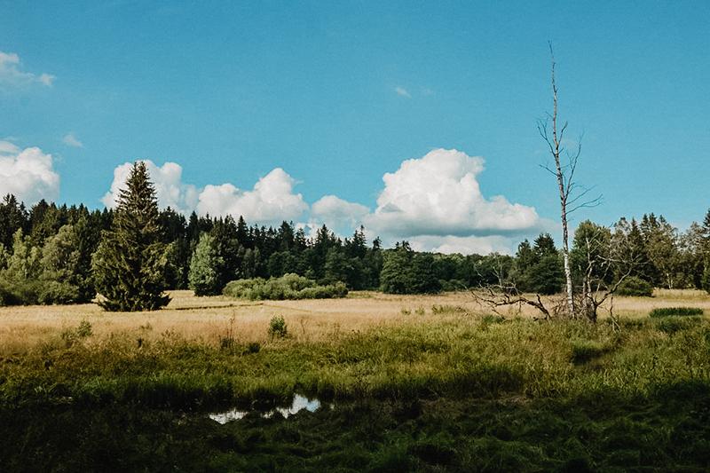 Výlet na sever Českého lesa