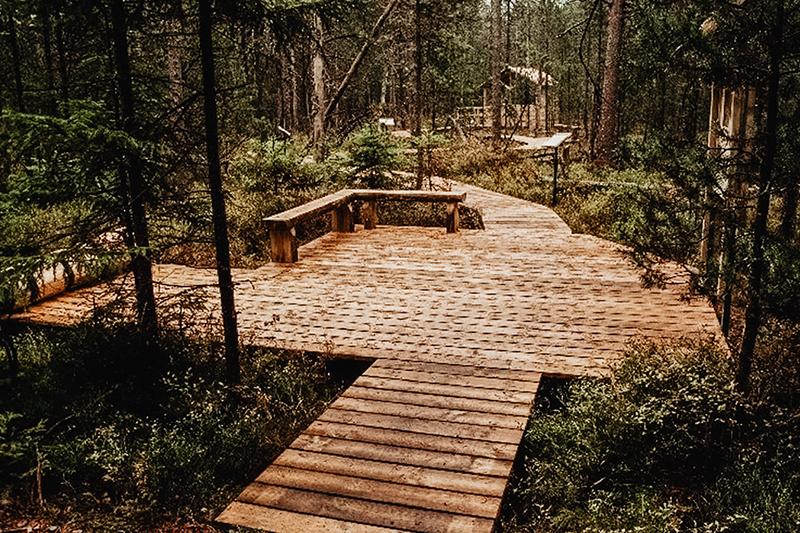 Lesní rašeliniště Podkovák