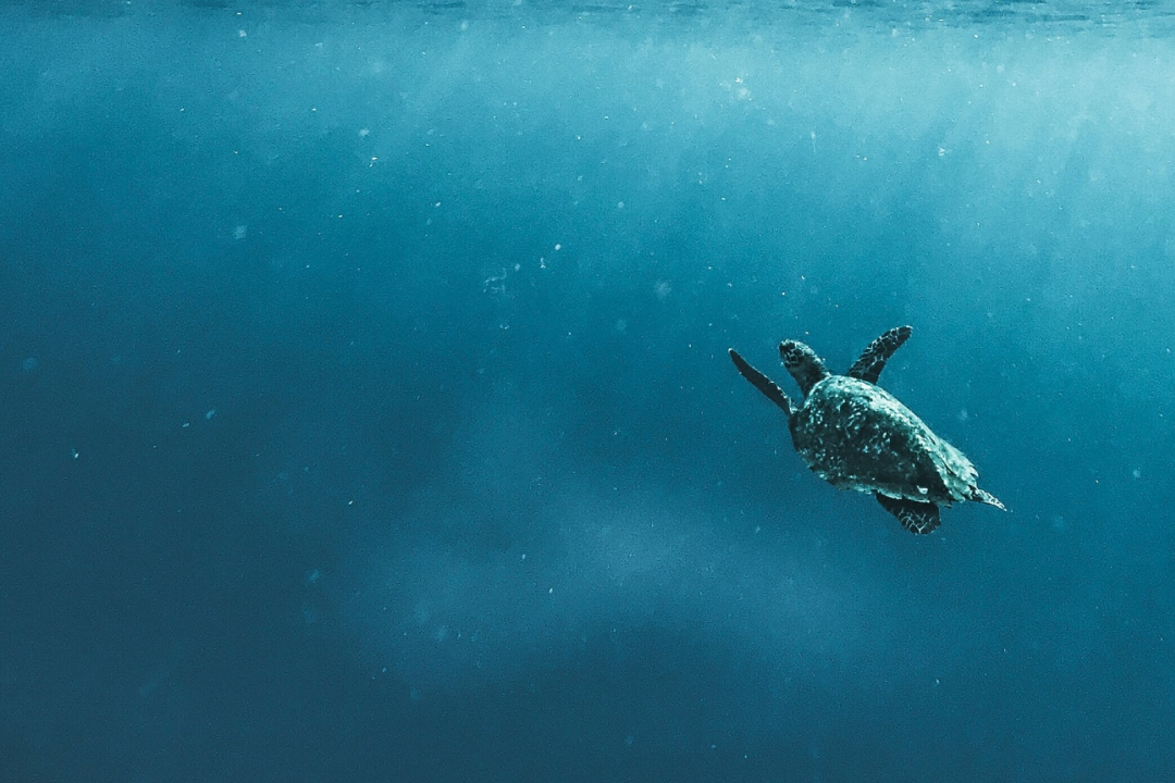 Ocean protection