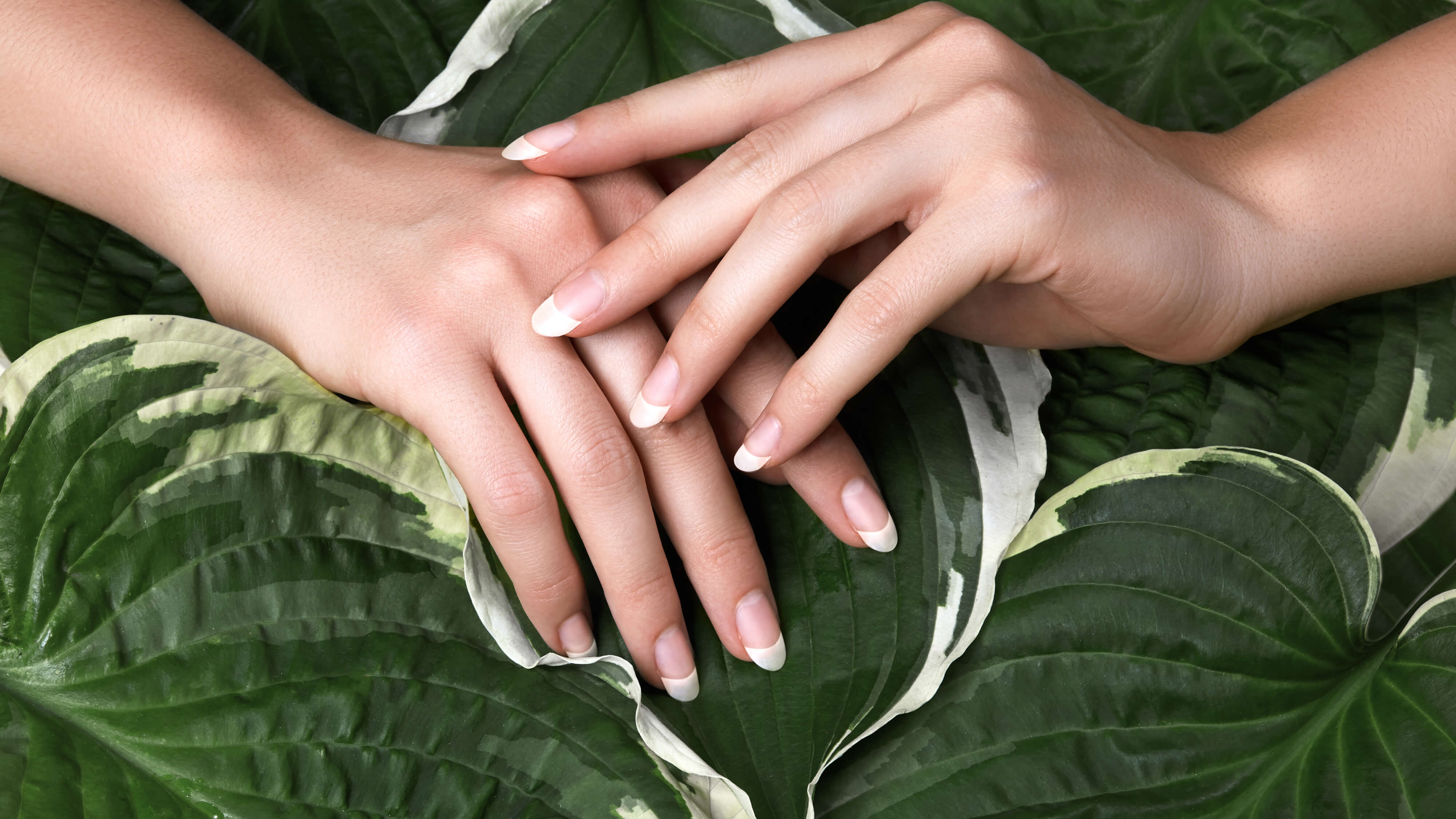 Beautifully french manicured hands placed one over the other in front of giant green leaves