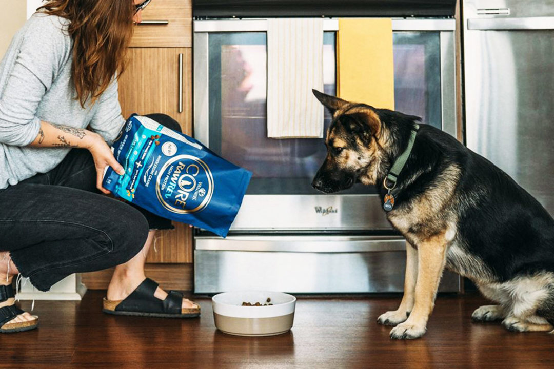 A dog waiting to be fed with Wellnes Core dog food by Wellpet