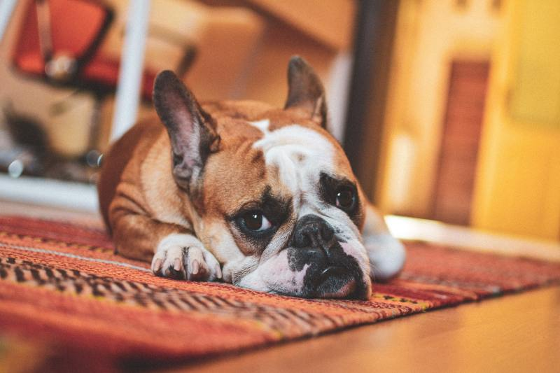 rental agreement - dogs and other pets