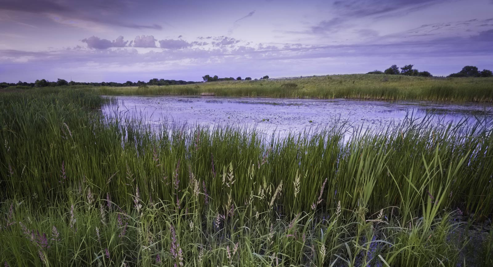 Wetlands with a purple-grey sky and a green foreground.