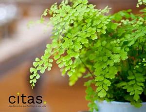 Quais são as melhores plantas para ter no quarto?