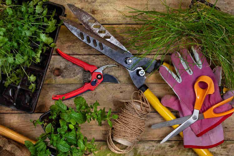 Jardim em apartamento: Algumas ferramentas são importantes